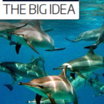 NewScientist-dolphin-piece